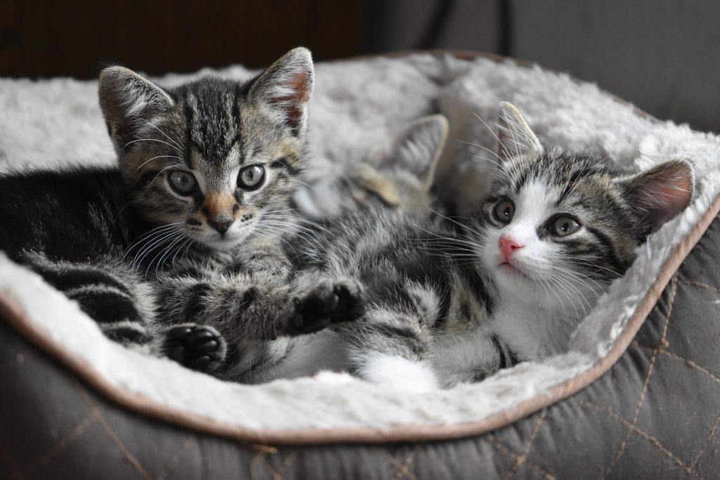 Productos para Mascotas y Animales