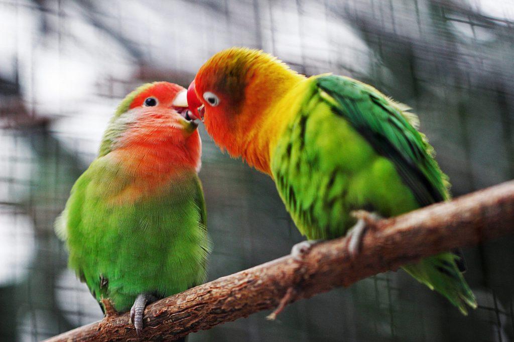 Pájaros y Aves